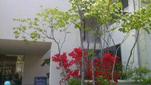 タマホーム物件レポート ABCハウジング成城住宅公園